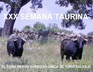 20 XXX Semana Cultural Placentina-2010